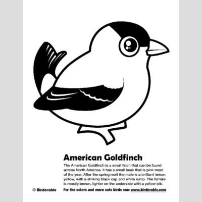 American Goldfinch Coloring Page sample