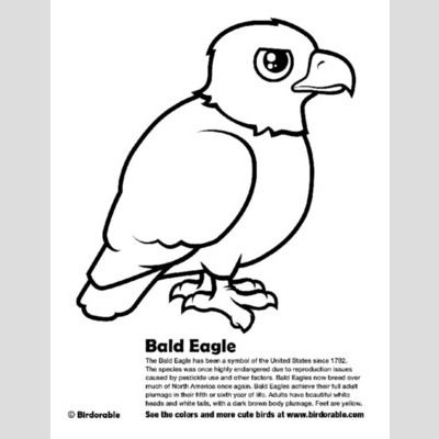 - Bald Eagle Coloring Page < Fun Free Downloads & Activity Pages :: Birdorable