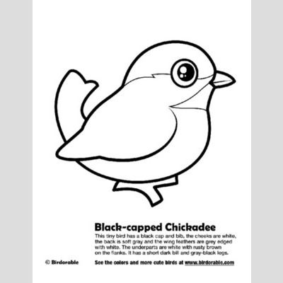 Black-capped Chickadee Coloring Page sample
