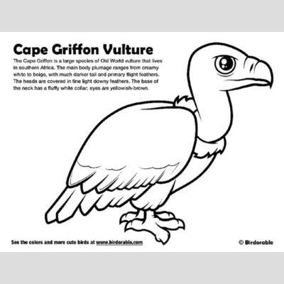 Cape Griffon Vulture Coloring Page < Fun Free Downloads & Activity ...