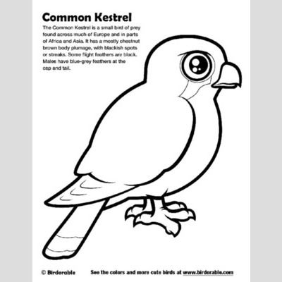 Common Kestrel Coloring Page sample