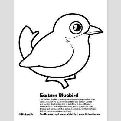 Eastern Bluebird Coloring Page sample