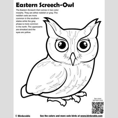 Eastern Screech-Owl Coloring Page sample