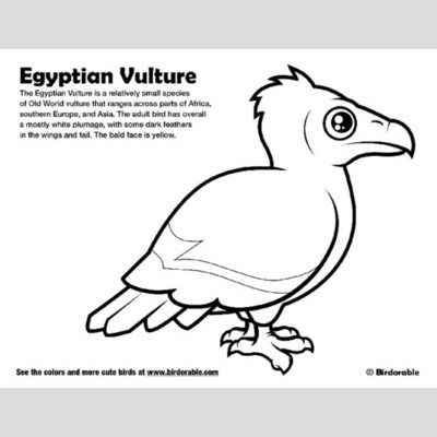 Egyptian Vulture Coloring Page sample