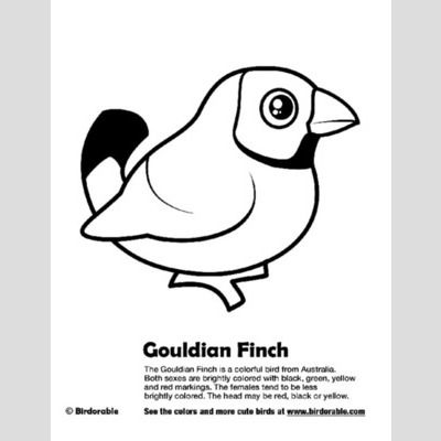 Gouldian Finch Coloring Page sample