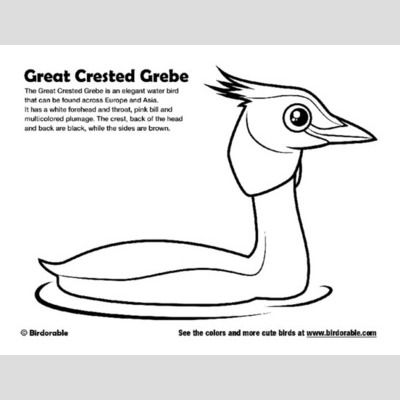 Great Crested Grebe Coloring Page sample