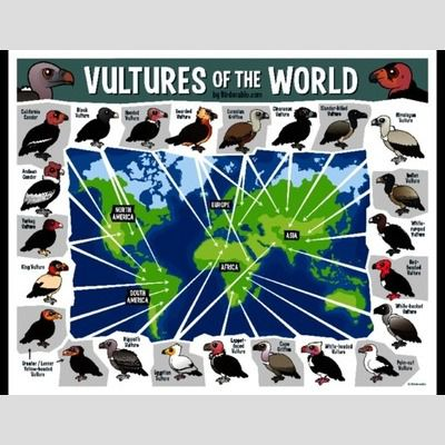 Vultures of the World Map sample