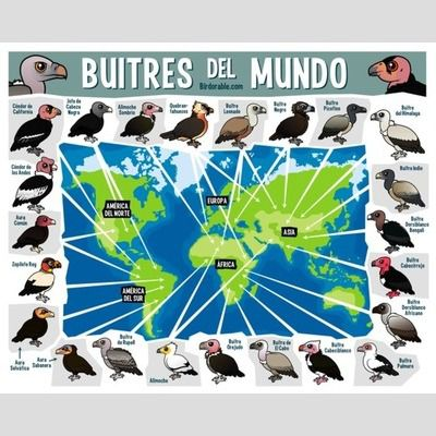 Buitres del Mundo sample