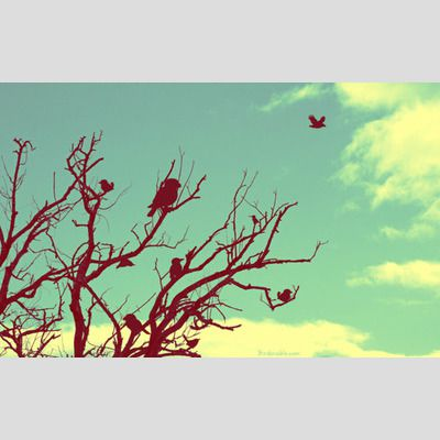 Silhouette Tree with Birds Wallpaper sample