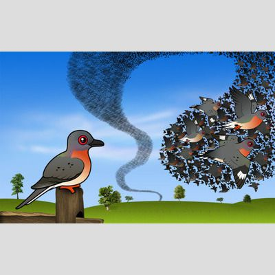 Passenger Pigeon Flock Wallpaper sample