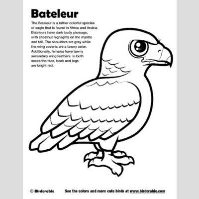 Bateleur Coloring Page sample