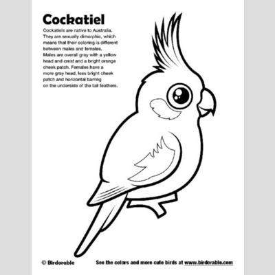 Cockatiel coloring page for Cockatiel coloring pages