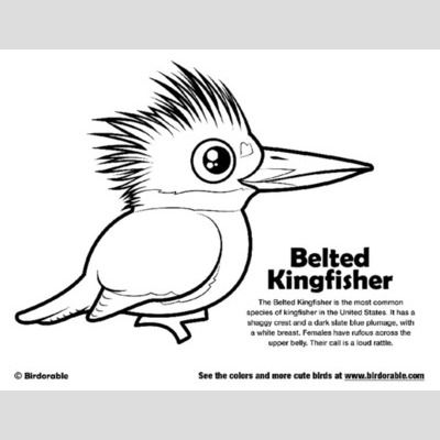 Belted Kingfisher Coloring Page Sample