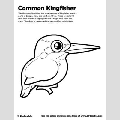 Common Kingfisher Coloring Page Sample