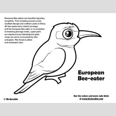 European Bee Eater Coloring Page Sample