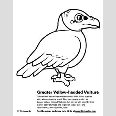 Greater Yellow-headed Vulture Coloring Page sample