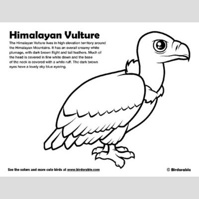 Himalayan Vulture Coloring Page