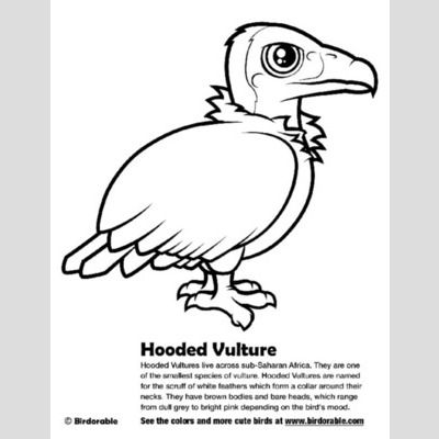 Hooded Vulture Coloring Page sample