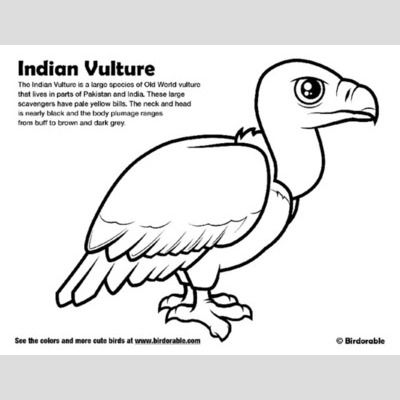 Indian Vulture Coloring Page sample