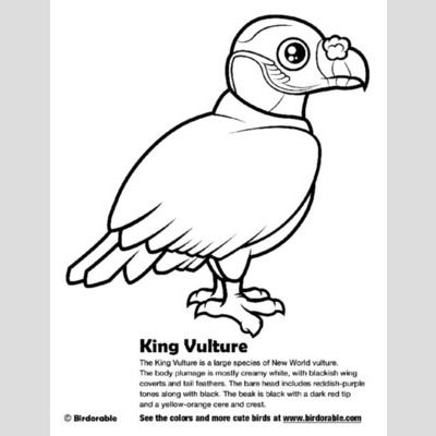 King Vulture Coloring Page sample