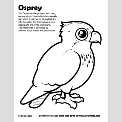Osprey Coloring Page sample