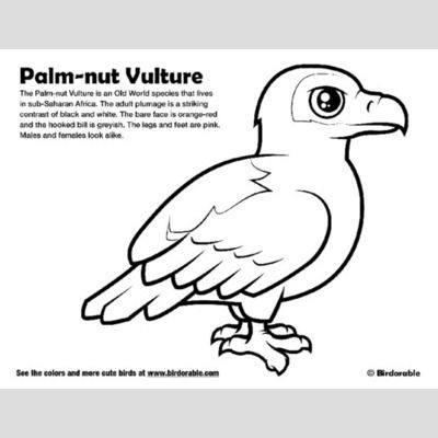 Palm-nut Vulture Coloring Page sample