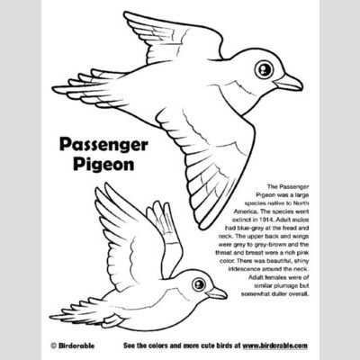 Passenger Pigeon Coloring Page sample