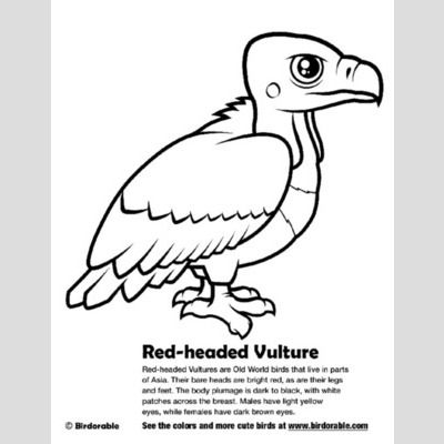 Red-headed Vulture Coloring Page sample