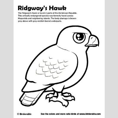 ridgways hawk coloring page