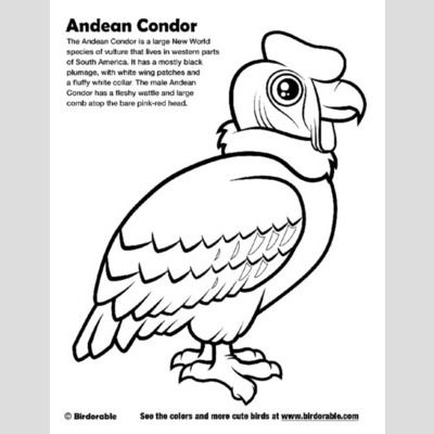 Andean Condor Coloring Page sample