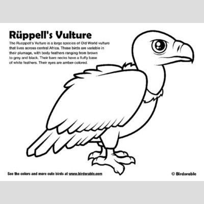 Rueppell's Vulture Coloring Page sample