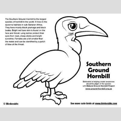 Southern Ground-Hornbill Coloring Page sample