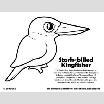 Stork-billed Kingfisher Coloring sample