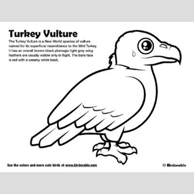 Turkey Vulture Coloring Page sample