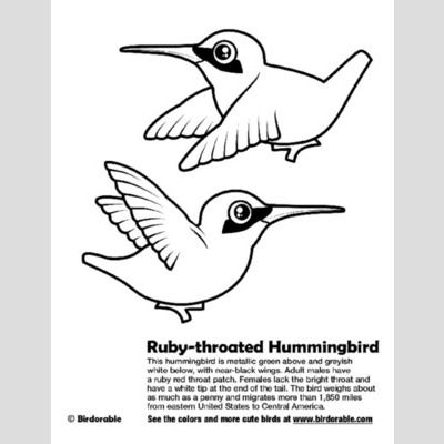 ruby throated hummingbird coloring page sample