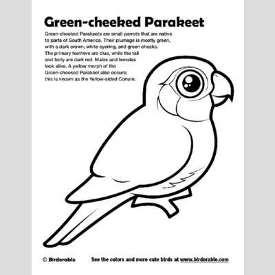 Greencheeked Parakeet Coloring Page  Fun Free Downloads