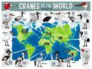 Cranes of the World Map