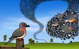 Passenger Pigeon Flock Wallpaper