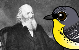 Warbler Week: The Stories Behind the Names