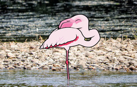 Flamingo FAQs
