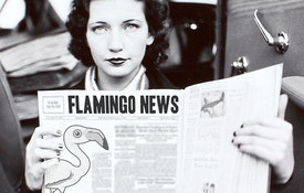Flamingos in the News