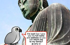 Lost parrot talks his way home in Japan