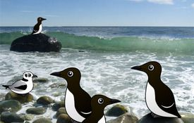 A Fragrance of Murres