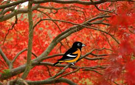 Orange these Baltimore Orioles cute?