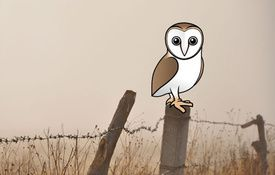 Introducing the Birdorable Barn Owl