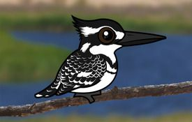 Introducing the Birdorable Pied Kingfisher