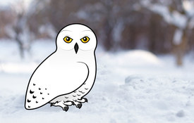 10 Cool Facts about Snowy Owls