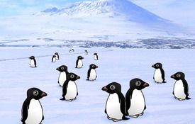 Fun Adelie Penguin Facts