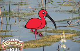 Birdorable 184: Scarlet Ibis