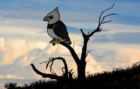 Birdorable 191: Harpy Eagle